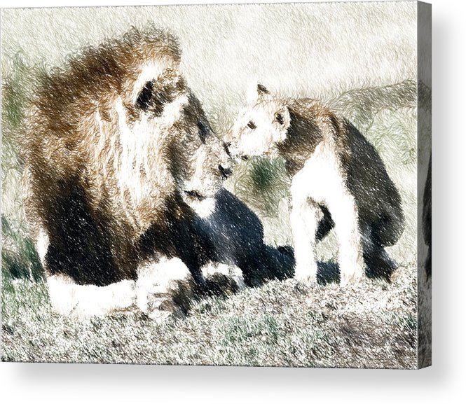 Lions Acrylic Print featuring the drawing Father And Son by Tyejuan Johnson