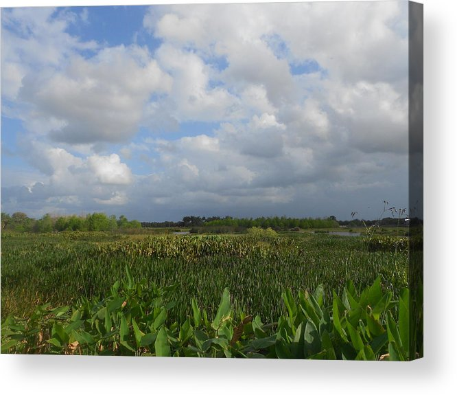 Nature Acrylic Print featuring the photograph Field Of Dreams by Sheila Silverstein