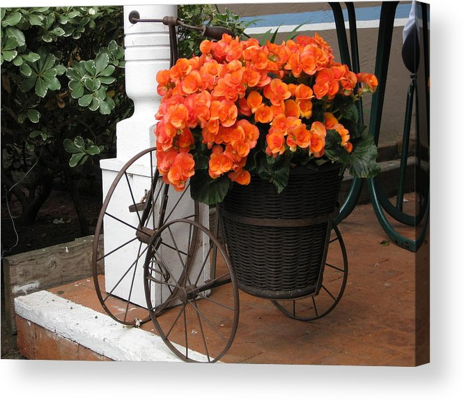 Flowers Acrylic Print featuring the photograph Flower Bike by Diana Poe