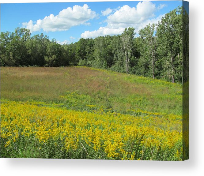 Meadows Acrylic Print featuring the photograph Flowers And Grass Two by Tina M Wenger