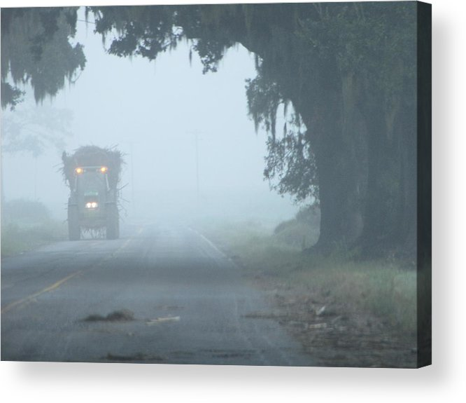 Foggy Sugarcane Morning Acrylic Print featuring the photograph Foggy Sugarcane Morning by Betty Berard