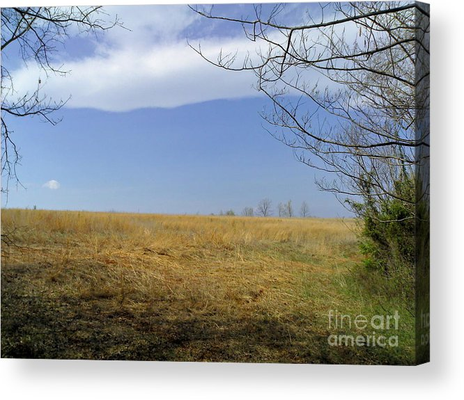 Field Acrylic Print featuring the photograph Forgetful by Kelli Sanchez