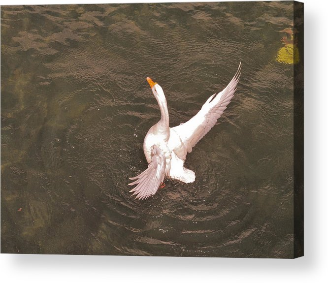 Acrylic Print featuring the photograph Free Now by Amit Singh