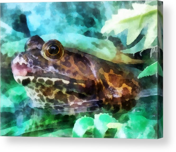 Frog Acrylic Print featuring the photograph Frog Ready To Be Kissed by Susan Savad