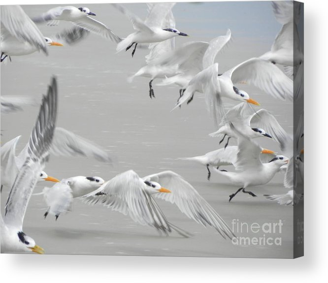 Art Acrylic Print featuring the photograph Get The Flock Outta Here by Jack Norton