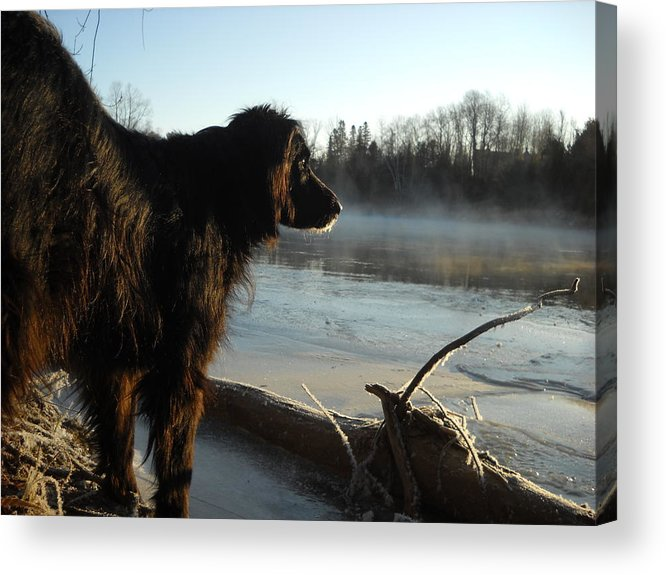 Dog Acrylic Print featuring the photograph Good Morning Mississippi River by Kent Lorentzen