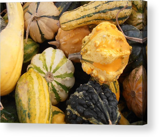 Gourds Acrylic Print featuring the photograph Gourds by Kimberly Perry
