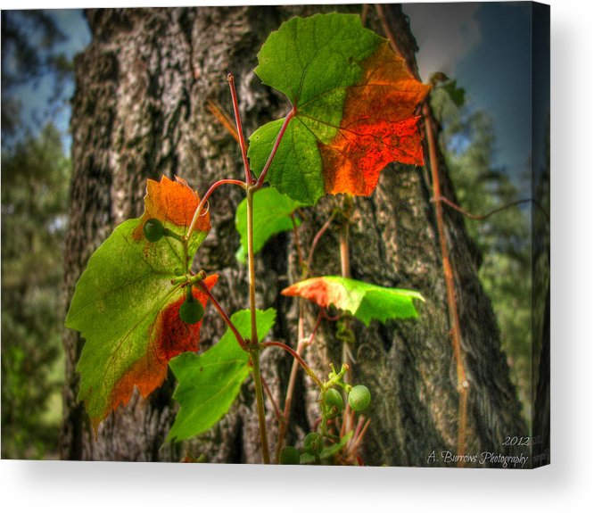 Prescott National Forest Acrylic Print featuring the photograph Halfway Colored For Autumn by Aaron Burrows