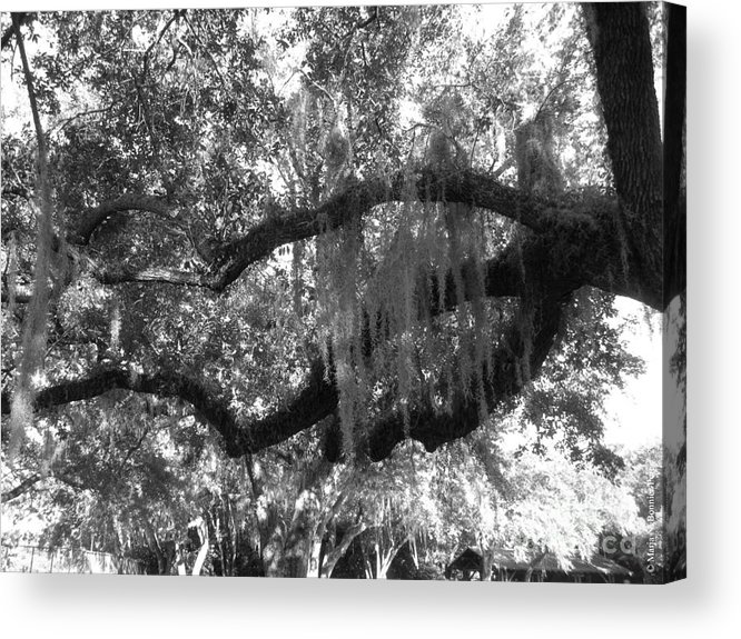 Oak Acrylic Print featuring the photograph Hand Of The Mossy Oak by Maria Bonnier-Perez