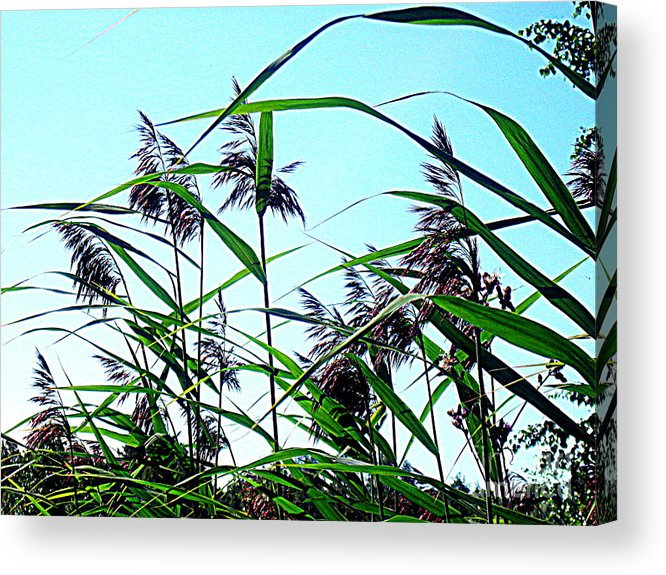 Blue Canvas Prints Acrylic Print featuring the photograph Hay In The Summer by Pauli Hyvonen