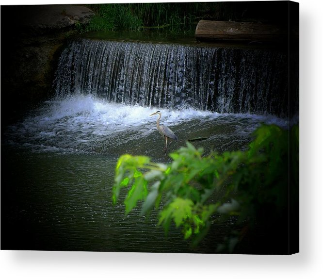 Heron Acrylic Print featuring the photograph Heron Dam by Michael L Kimble