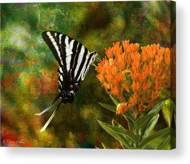 J Larry Walker Acrylic Print featuring the digital art Hungry Little Butterfly by J Larry Walker