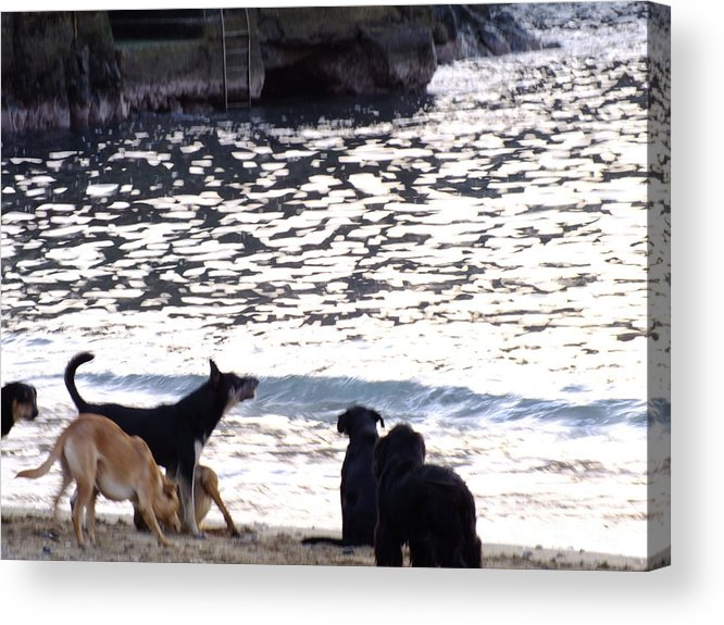Perros Acrylic Print featuring the photograph Ladridos De Mar by Karin Cortez