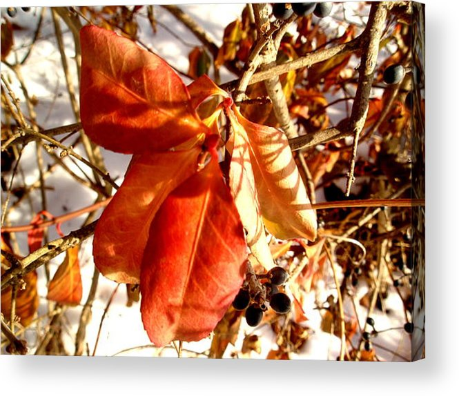 Leaves Acrylic Print featuring the photograph Leaves And Small Berries by Beth Akerman