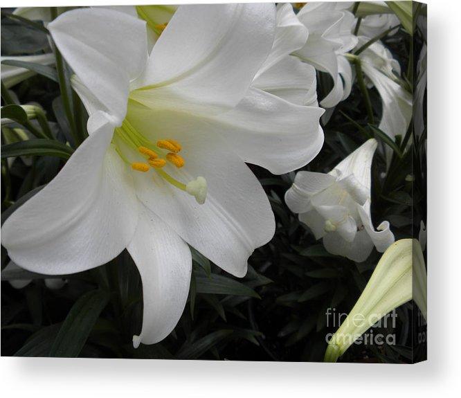 Flower Acrylic Print featuring the photograph Lilies by Silvie Kendall