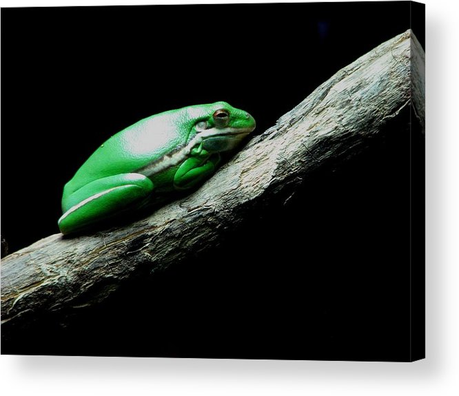 Kathy Long Acrylic Print featuring the photograph Little Green Frog by Kathy Long