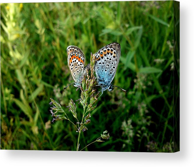 Butterfly Acrylic Print featuring the photograph Loving by Lucy D