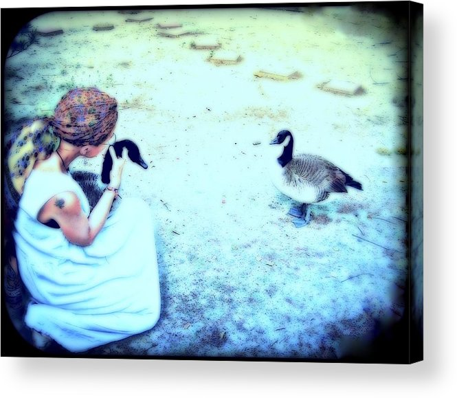 Canada Geese Acrylic Print featuring the mixed media Mother And Geese by YoMamaBird Rhonda