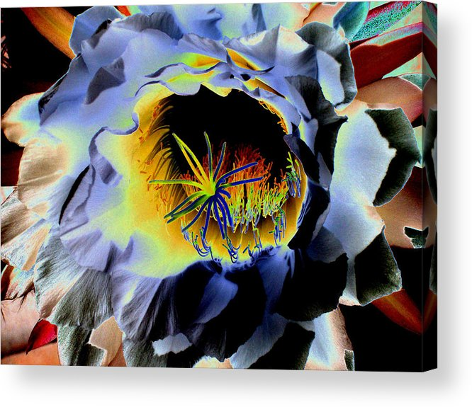 Bloom Acrylic Print featuring the photograph Mysterious Night Bloom by Patricia Haynes