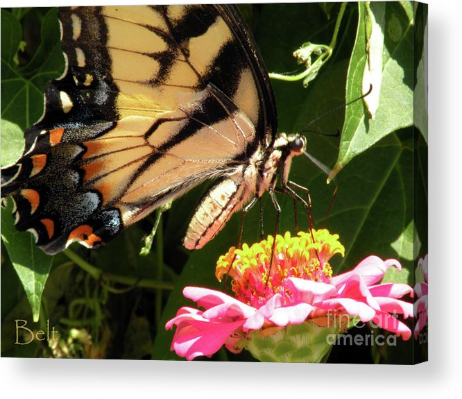 Butterfly Acrylic Print featuring the photograph No.15 by Christine Belt