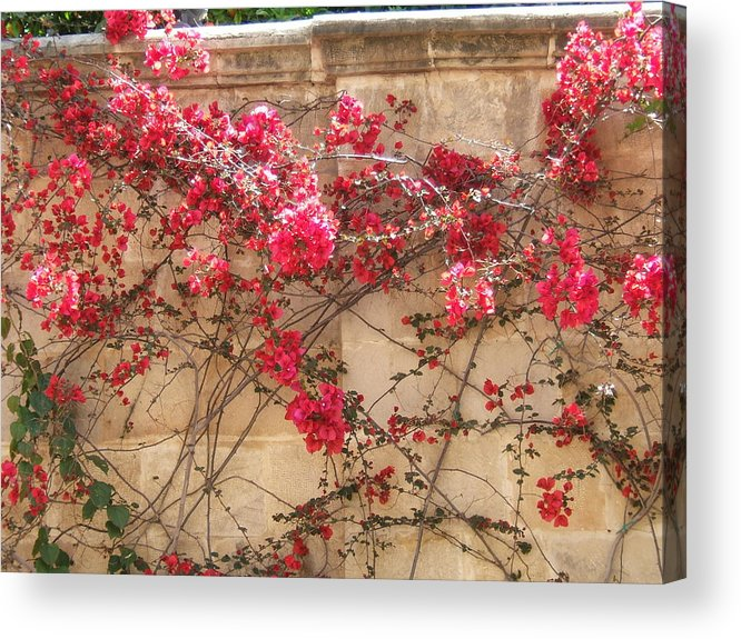 Bougainvillea Acrylic Print featuring the photograph On The Way To The Colosseum by Patricia Williams