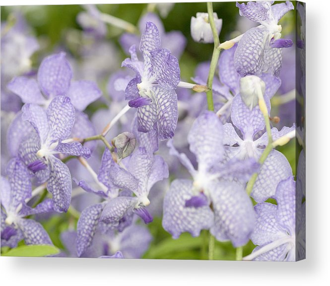 Ribet Acrylic Print featuring the photograph Orchid Blooms by C Ribet