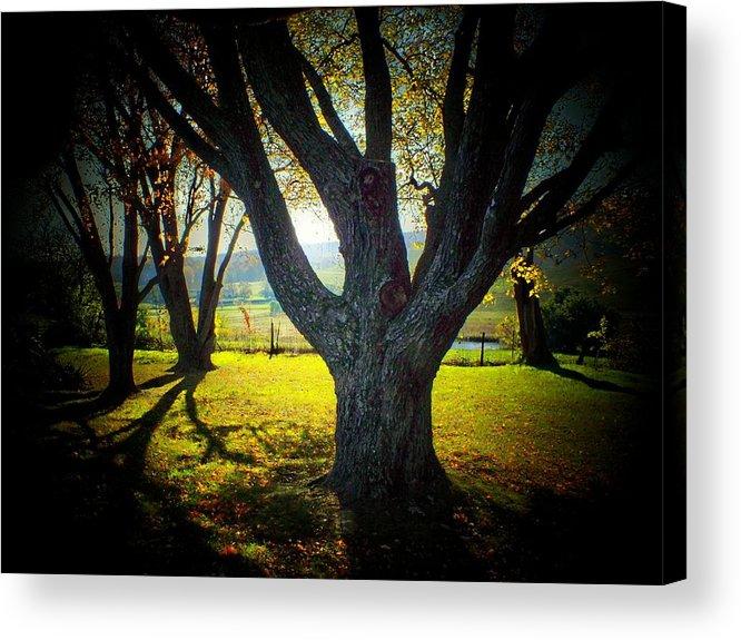 Back Lit Acrylic Print featuring the photograph Paris Tree by Michael L Kimble