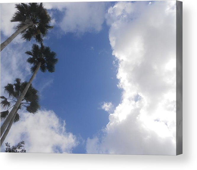 Palm Trees Acrylic Print featuring the photograph Passage by Sheila Silverstein
