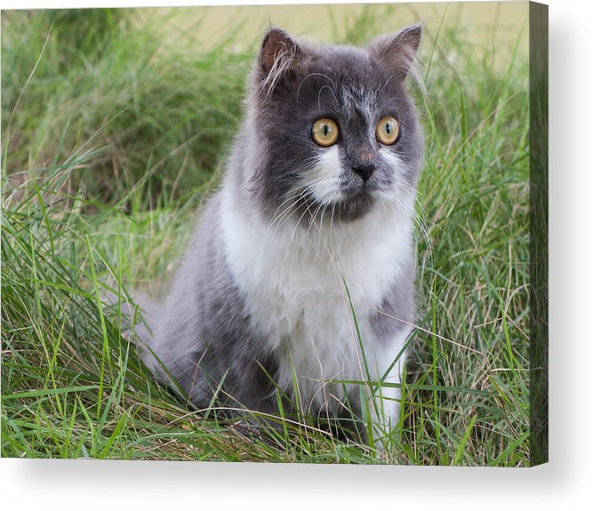 Adorable Acrylic Print featuring the photograph Persian Cat Sit In Green Yard by Nawarat Namphon