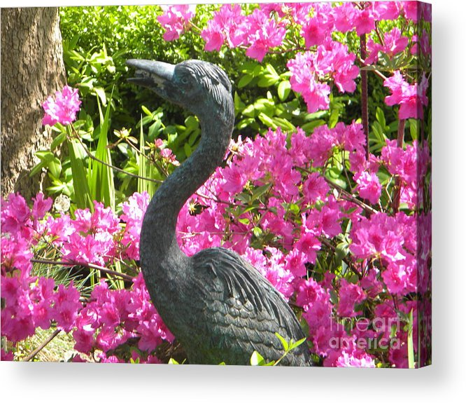 Swan Acrylic Print featuring the painting Pinkness Of A Bird by Kimberlee Weisker