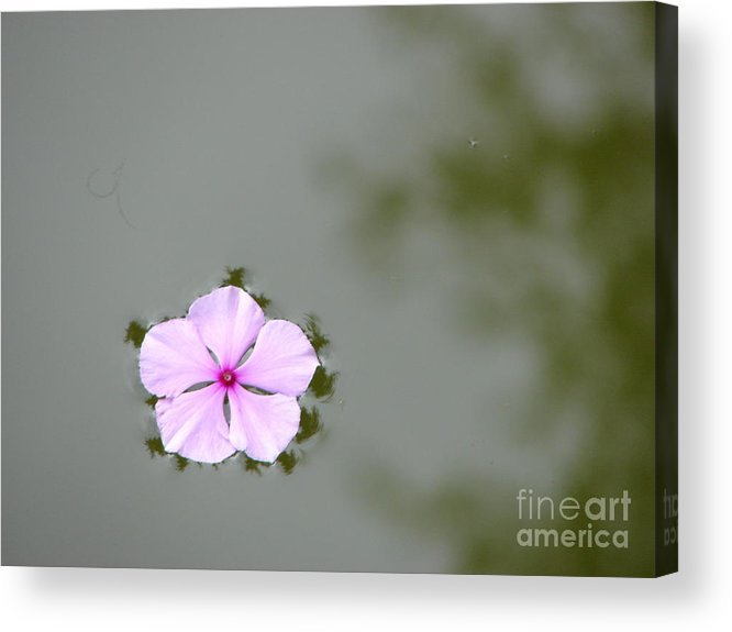 Float Acrylic Print featuring the photograph Ponder by Priscilla Richardson
