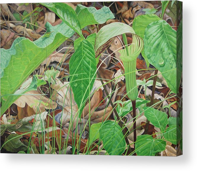 Jack In The Pulpit Acrylic Print featuring the painting Preacher In The Woods by - Harlan
