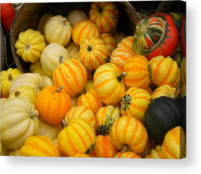 Pumpkins Acrylic Print featuring the photograph Pretty As A Pumpkin by Patricia Williams