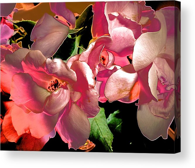 Rosie Abstract Acrylic Print featuring the photograph Rosie Abstract by Beth Akerman