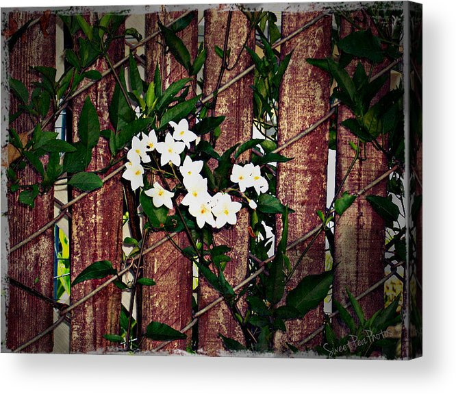 Fence Acrylic Print featuring the photograph Simplicity by Megan Robinson