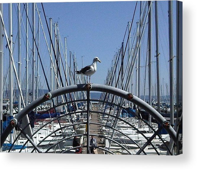 Seagull Acrylic Print featuring the photograph South Beach Seagull by Nimmi Solomon