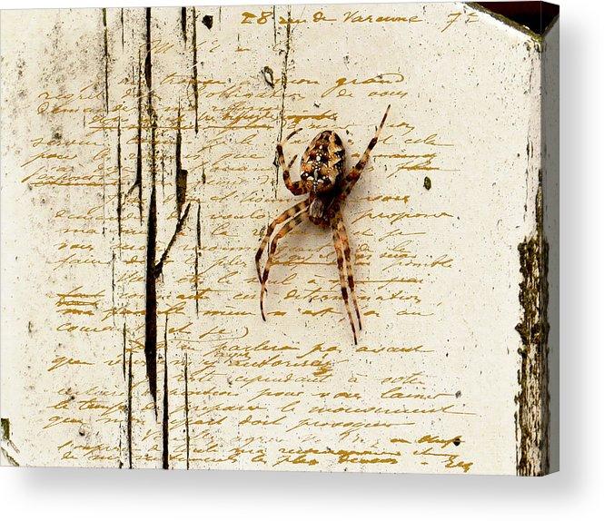 Spider Acrylic Print featuring the photograph Spider Letter by Yvon van der Wijk