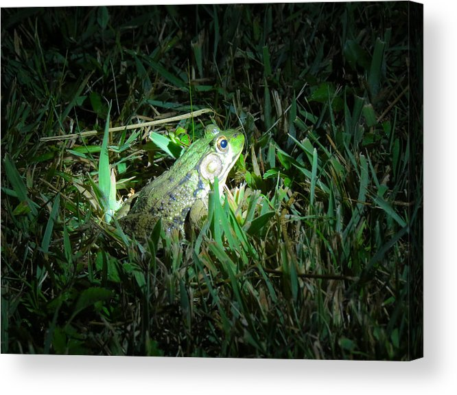 Frog Acrylic Print featuring the photograph Spotted by Azthet Photography