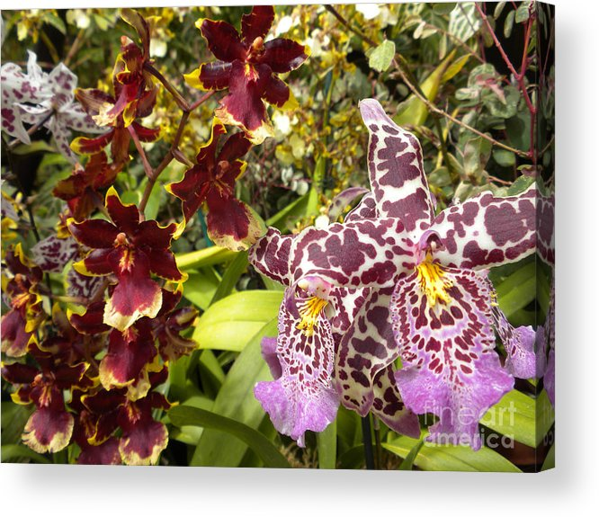 Nature Acrylic Print featuring the photograph Spotted Flowers by Silvie Kendall