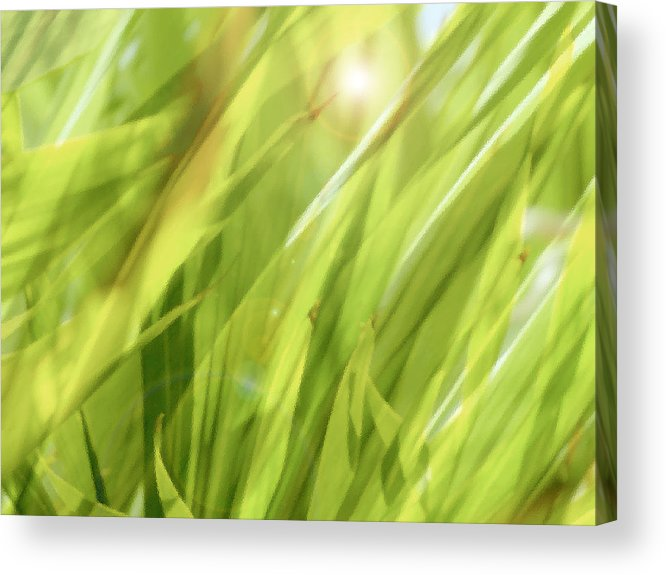 Green Acrylic Print featuring the photograph Summertime Green by Ann Powell