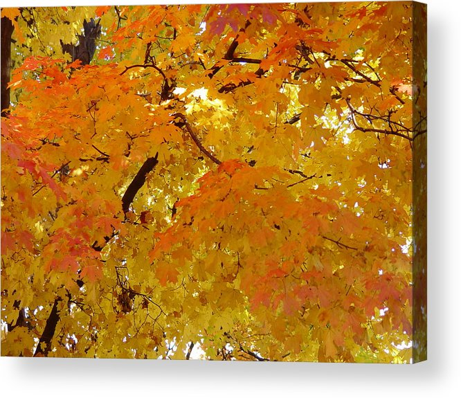 Sunkissed 3 Acrylic Print featuring the photograph Sunkissed 3 by Elizabeth Sullivan