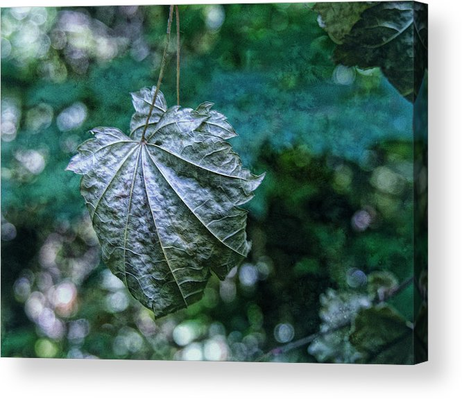Hanging Leaf Acrylic Print featuring the photograph Suspended by Bonnie Bruno
