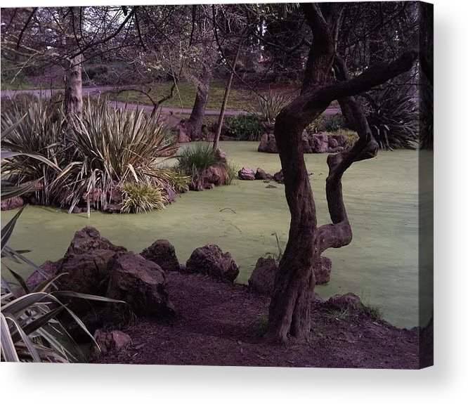 Swamp Acrylic Print featuring the photograph Swamp by Nimmi Solomon