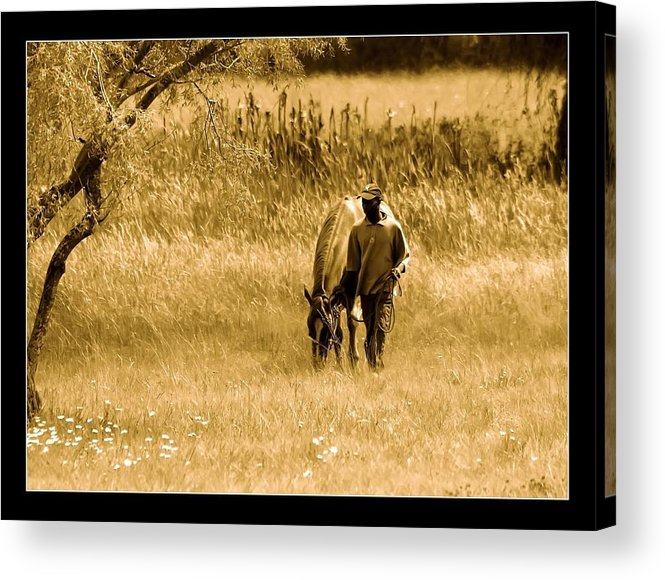 Horse Acrylic Print featuring the photograph The Walk by Helen Ahlers