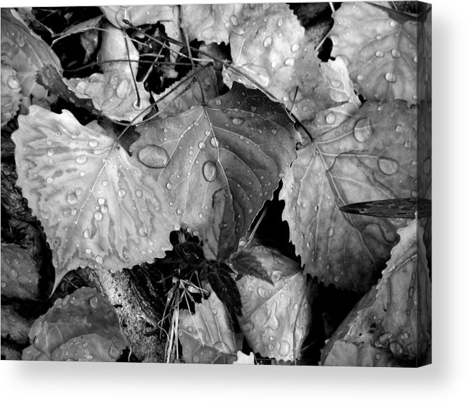Leaves Acrylic Print featuring the photograph Thirsty Leaves Black And White by Lora L Robertson