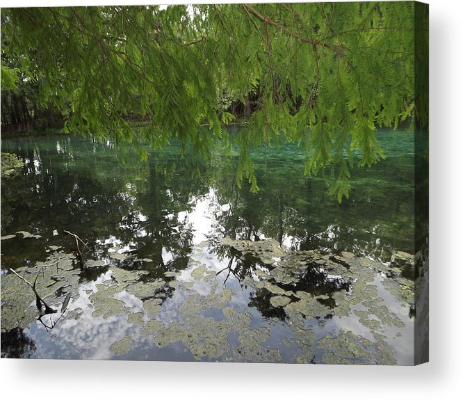 Water Acrylic Print featuring the photograph Through The Branches by Pamela Stanford
