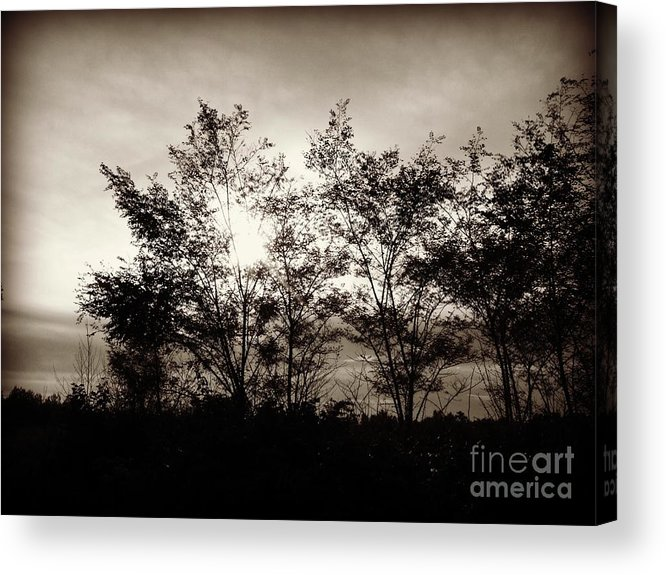 Sunlight Acrylic Print featuring the photograph Through The Trees by Christy Beal