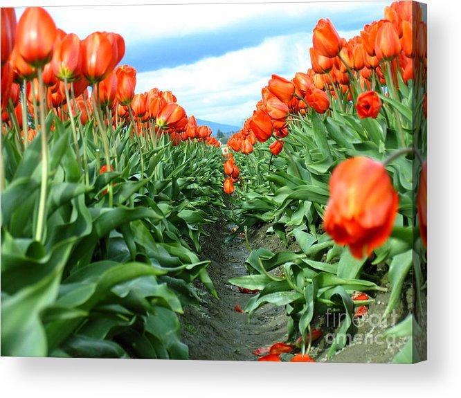 Tulip Acrylic Print featuring the digital art Tulips by Jaime Hernandez