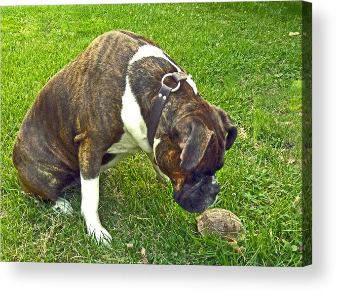 Dog Acrylic Print featuring the photograph Turtle Love by William Fields