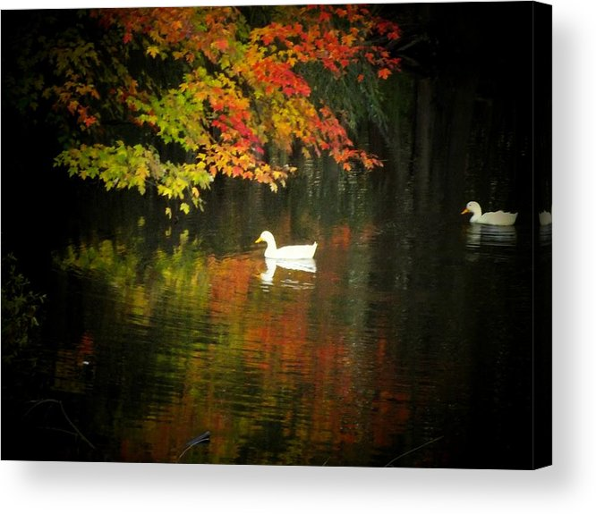 Ducks Acrylic Print featuring the photograph Two Ducks by Michael L Kimble